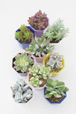 Succulent plants. In the pot Stock Photos