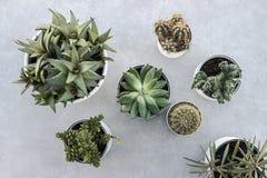 Succulent plants in pot on floor. Green succulent plants in pot on floor Stock Image