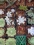 Succulent plants pot. Succulent plants was in the pot in a rainy days Royalty Free Stock Photography