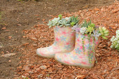 Succulent plants and rainshoes Stock Photos