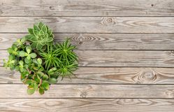 Succulent plants wooden background Minimal floral flat lay stock photo