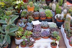 Succulent plants for sale at open air farmers market stock image