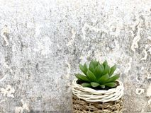 Succulent plants. Succulents plants in the potted ,closeup Royalty Free Stock Photography