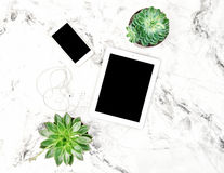 Succulent plants tablet PC phone Office table Flat lay Royalty Free Stock Image