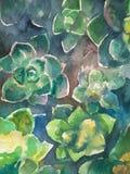 Succulent plants whotercolor illustration background stock illustration