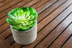 Succulent in pot small leaf placed on the table. Succulent plants are placed on a small wooden table royalty free stock images