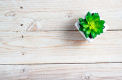 Succulent in pot. Wooden table background with copy space Stock Image
