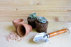 Succulent,pots and shovels. On the wooden floor royalty free stock images