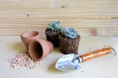 Succulent, potten en schoppen Royalty-vrije Stock Afbeeldingen