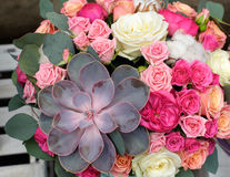 Succulent and roses Stock Photos