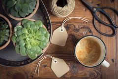 Succulent`s care. Home garden. Leisure time. Some succulent on a table, a coffee muf, two tags, a twine coil and a scissiors Stock Image