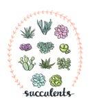 Succulent set. Royalty Free Stock Image
