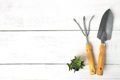 Succulent and shovel with rake stock photo