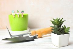 Succulent and shovel with rake royalty free stock photography