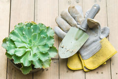 Succulent and shovel Stock Image