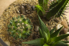 Succulent Terrarium Στοκ Φωτογραφία