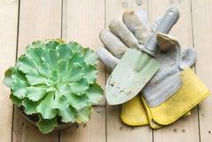Succulent und Schaufel Stockbild