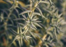 Succulent vert de fond abstrait de texture photographie stock libre de droits