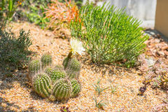 Succulent water wise desert garden Stock Images