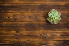 Succulent on wooden background. Top view stock image
