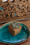 Succulent in wooden box Royalty Free Stock Photos
