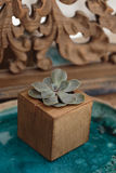 Succulent in wooden box Stock Photo