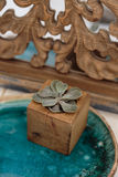 Succulent in wooden box Royalty Free Stock Photography
