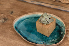 Succulent in wooden box Stock Photography