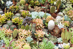 Succulent world Stock Photography