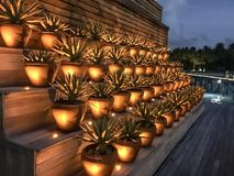 Succulente Avond Royalty-vrije Stock Afbeeldingen