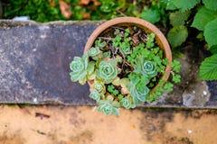 Succulente cactus in close-up, met mooi patroon Royalty-vrije Stock Afbeeldingen