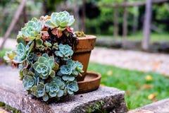 Succulente cactus in close-up, met mooi patroon Royalty-vrije Stock Foto's