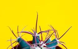 Succulente cactus, Geel Minimaal creatief stilleven als achtergrond Minimaal Art Design Royalty-vrije Stock Foto's