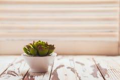 Succulente come decorazione domestica Fotografie Stock