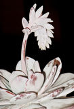 Succulente di fioritura Immagini Stock