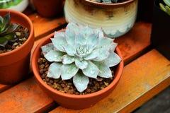 Succulente installatiespot Royalty-vrije Stock Fotografie