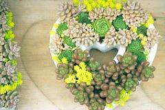 Succulente in legno del vaso di forma del cuore immagini stock libere da diritti