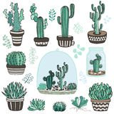 Succulente plants  Royalty Free Stock Image