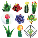 Succulente reeks royalty-vrije illustratie