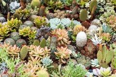 Succulente wereld Stock Fotografie