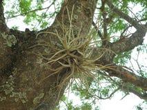 Succulente wildernis stock afbeelding