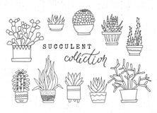Succulenti conservati in vaso decorativi Insieme di vettore degli elementi schizzati disegnati a mano fotografia stock
