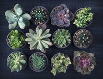 Succulenti differenti fotografia stock