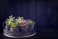 Succulenti differenti fotografia stock libera da diritti