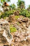 Succulenti e fiori di fioritura del cactus Immagine Stock Libera da Diritti