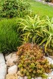 Succulenti e fiori di fioritura del cactus Fotografia Stock