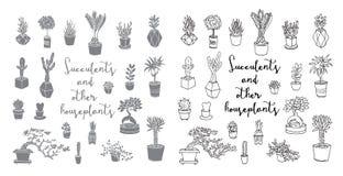 Succulenti ed altre piante da appartamento royalty illustrazione gratis