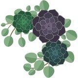 Succulenti ed illustrazione dell'eucalyptus royalty illustrazione gratis