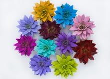 Succulenti multicolori di una composizione fotografia stock libera da diritti
