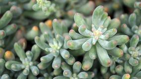 Succulenti o cactus nel giardino botanico del deserto con il fondo dei ciottoli della pietra della sabbia per la decorazione e la immagine stock